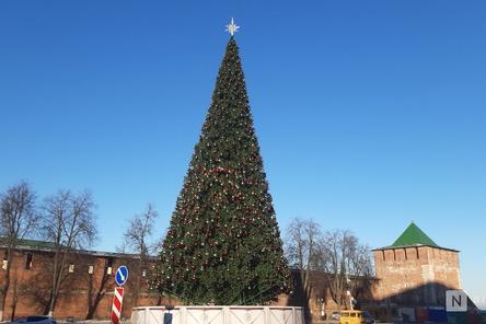 Главную городскую елку нарядили в Нижнем Новгороде