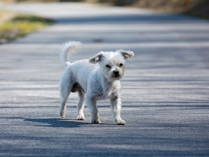 Водитель мопеда пострадал в Ардатове после встречи с собакой