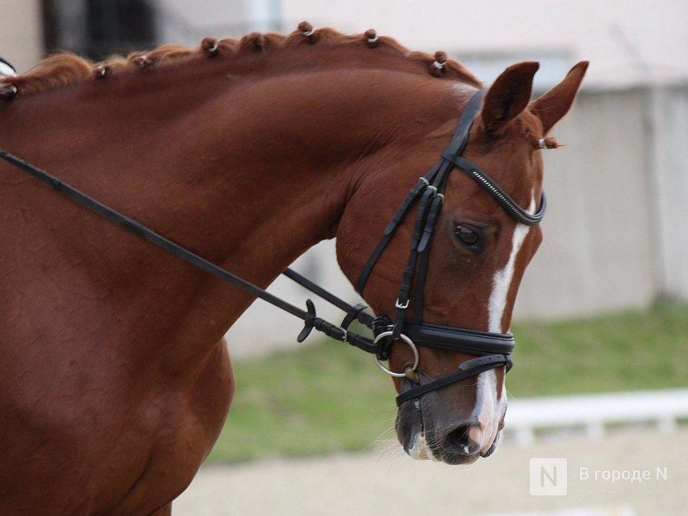 «Швейцарский экспресс» нижегородцы предложили заменить на лошадей - фото 1