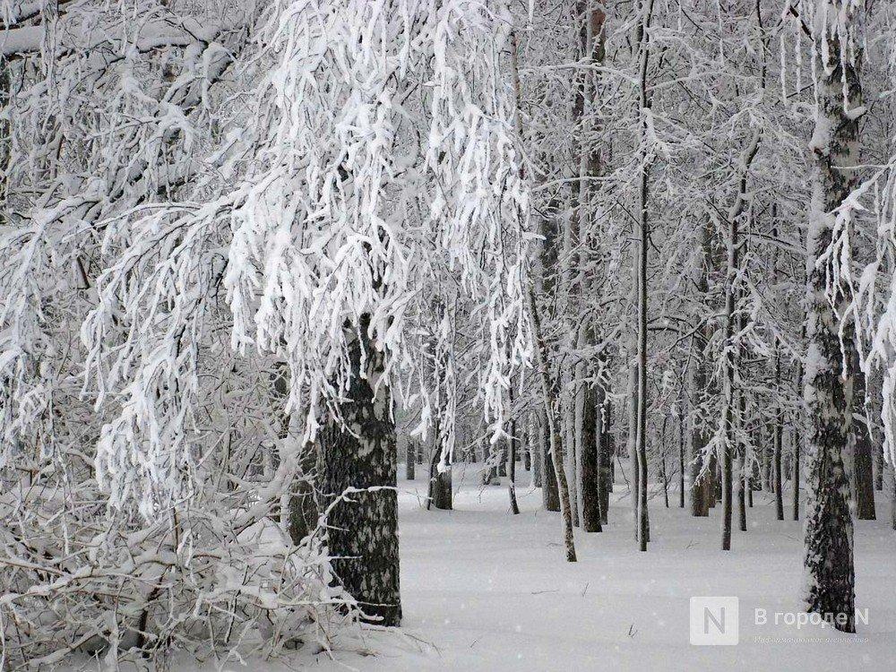 Похолодание до -8°С и снегопады принесет нижегородцам наступившая неделя - фото 1