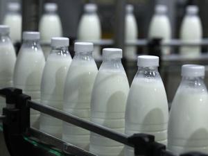 На 4% увеличилось производство молока в Нижегородской области