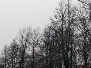 Усиление скорости ветра до 17 м/с ожидается в Нижегородской области в ближайшее время