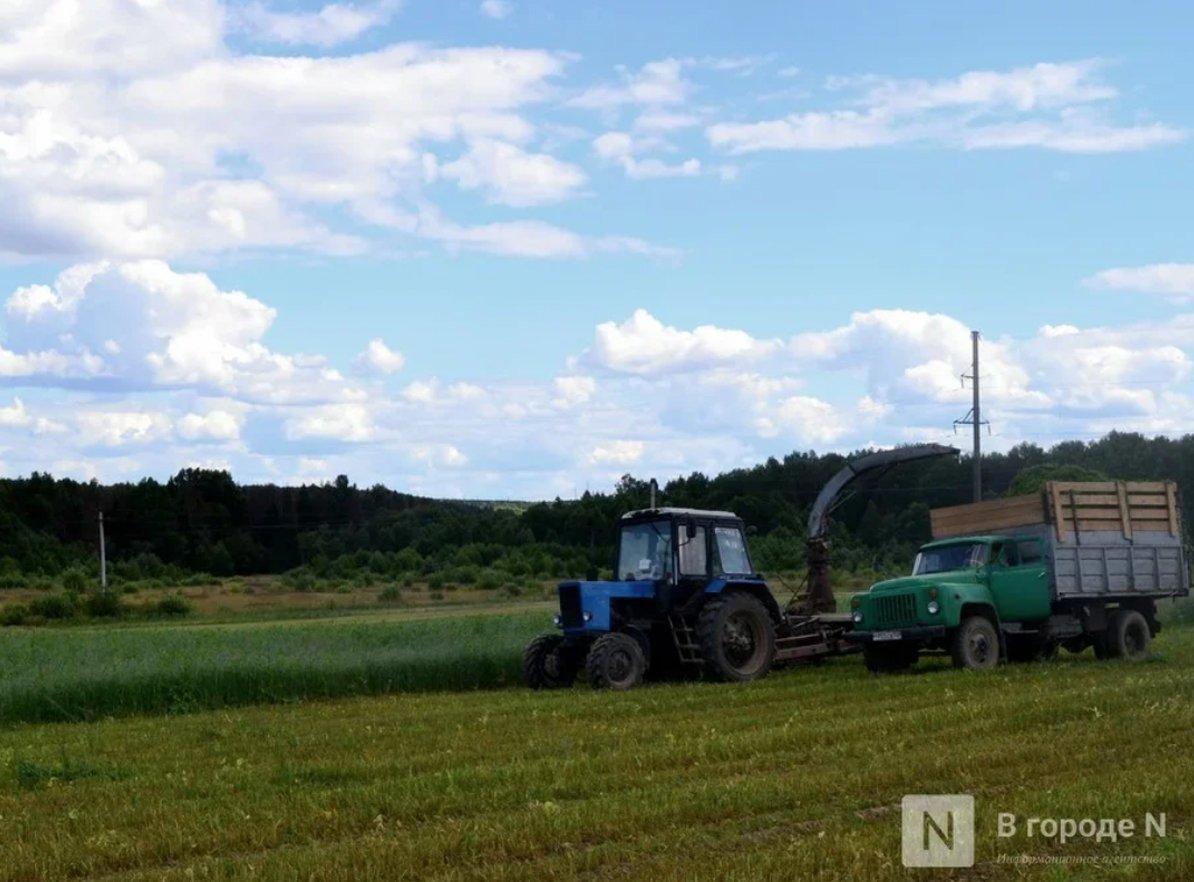 Начинающие нижегородские фермеры смогут получить гранты до 6 млн рублей - фото 2