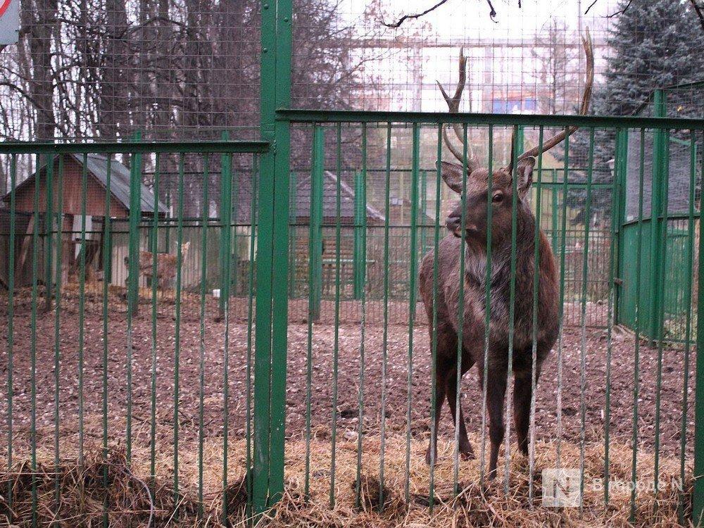 Прокуратура не нашла нарушений в нижегородском зоопарке «Мишутка» - фото 2