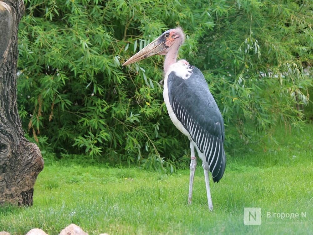 Уникальный вольер для марабу построили в нижегородском зоопарке - фото 1