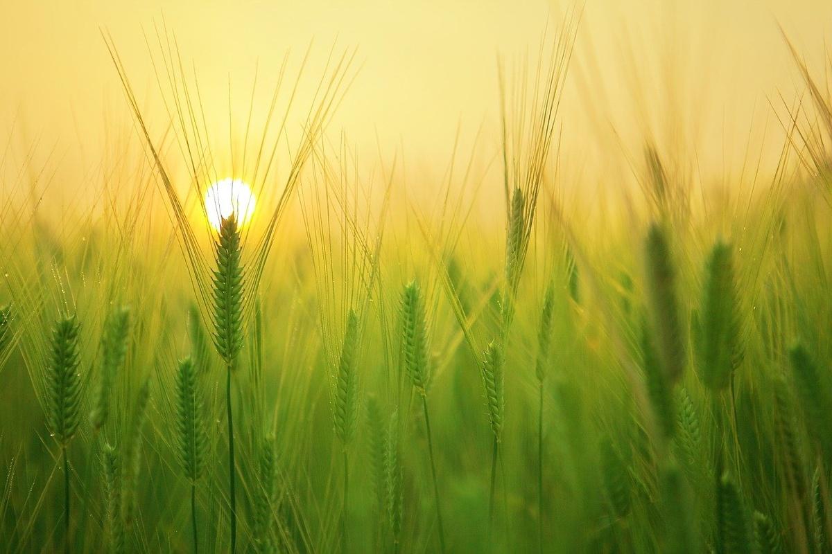 Нижегородские сельхозпредприятия ожидают рост цен на продукты - фото 1