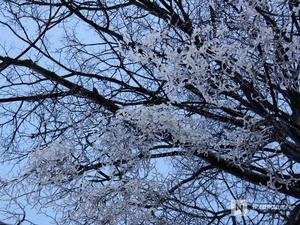 МЧС предупреждает нижегородцев о ледяном дожде