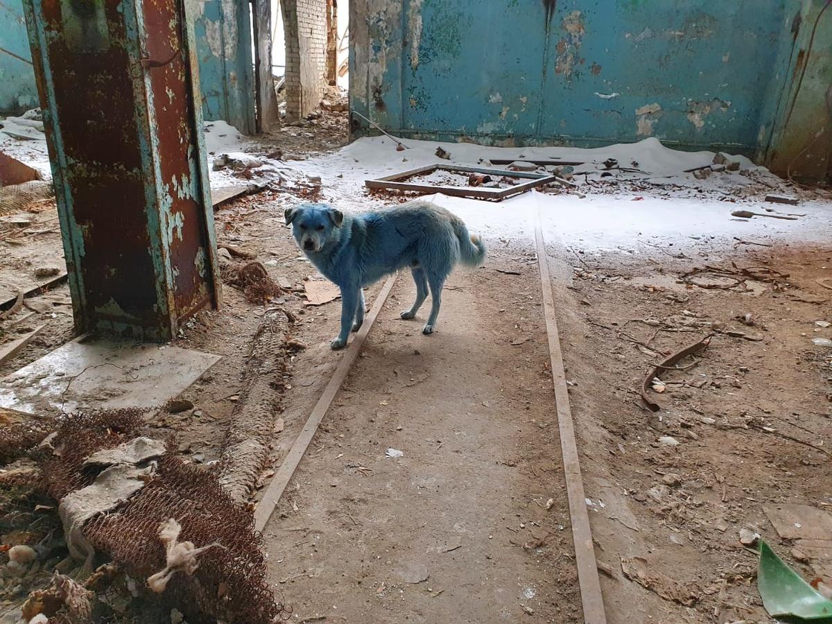 Ветеринары не выявили угрозы жизни голубых собак из Дзержинска - фото 1