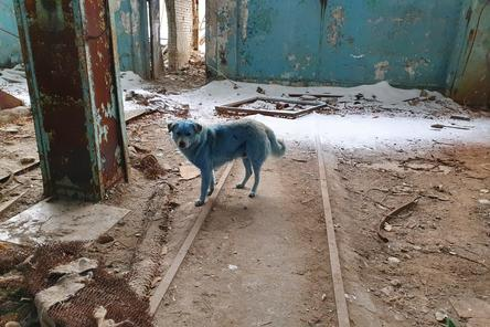 Ветеринары не выявили угрозы жизни голубых собак из Дзержинска