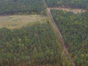 Нижегородский деплесхоз не выявил фактов незаконной вырубки деревьев фирмой Никиты Михалкова