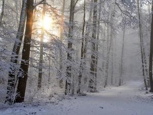 Лесной баланс планируют восстановить в Нижегородской области к 2024 году